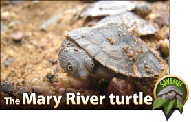 Save the endangered Mary River Turtle.